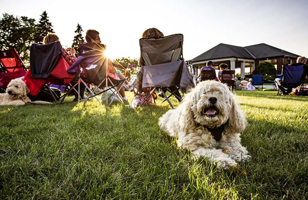 Music at Harry's Place is dog-friendly