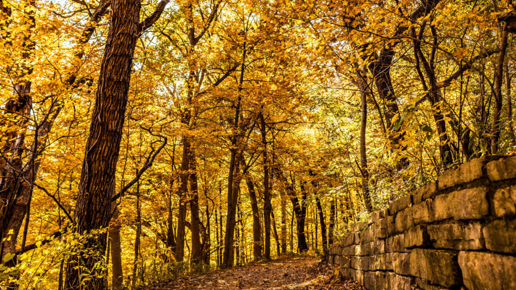 Big Hill Park is one of the hings to do in Fall
